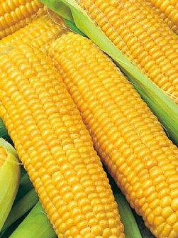желтая кукуруза для производства пищевых стабилизаторов дело вкуса